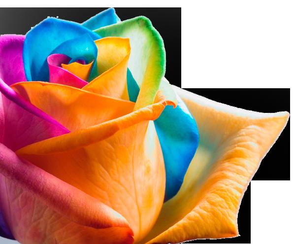 rainbow016